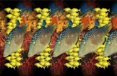 Стереорыбки для расслабления зрения. Стереокартики на тему рыб